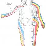 首から来る手のしびれ~皮膚分節知覚帯・デルマトームとは~